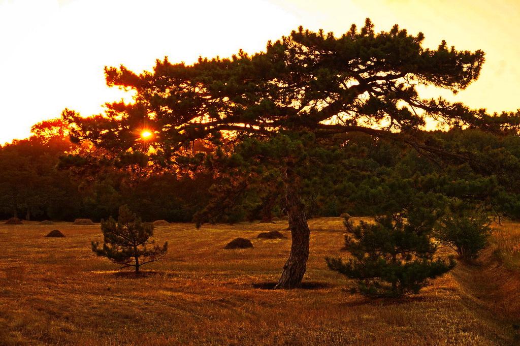 Захід сонця в Асканії-Нова